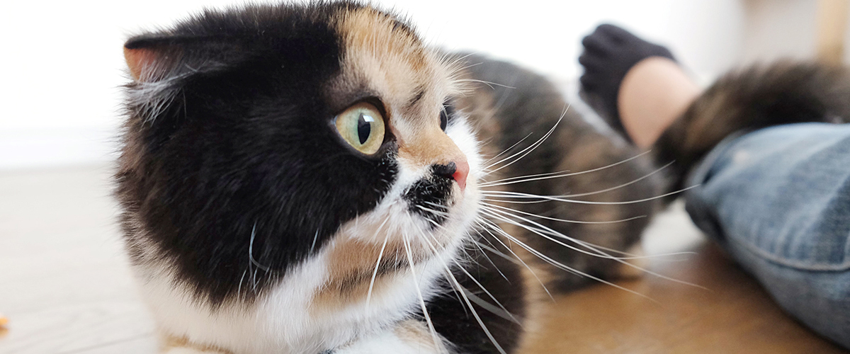 【猫ちゃん紹介】ぶちにゃん
