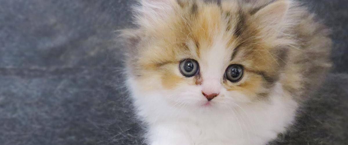 【猫ちゃん紹介】ほっぺ