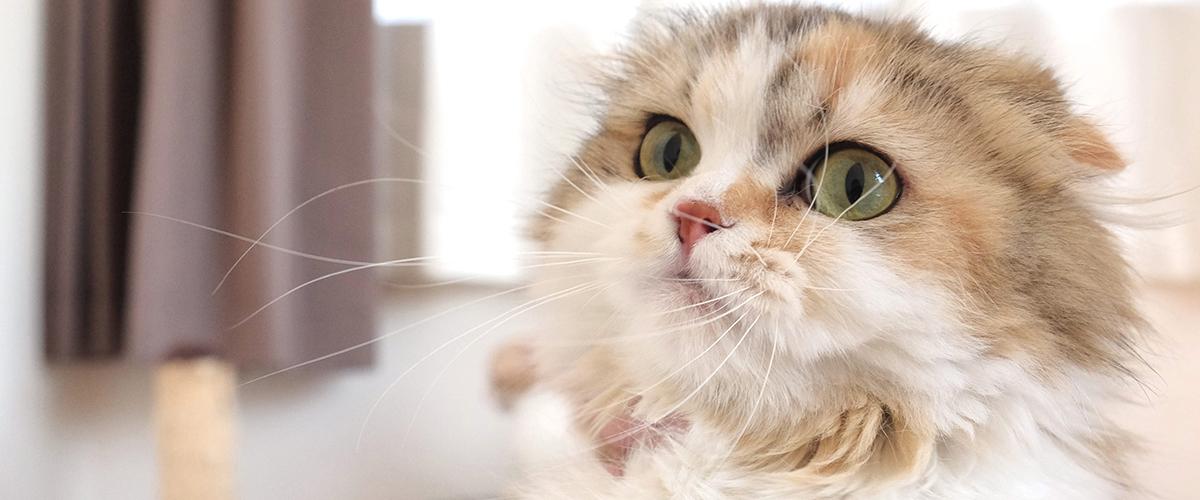 【猫ちゃん紹介】まろちゃん
